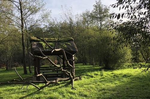Abgestorbener Baum als Dekoration im Vogelpark