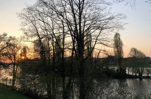 Blick auf eine Neckarinsel im Abendrot