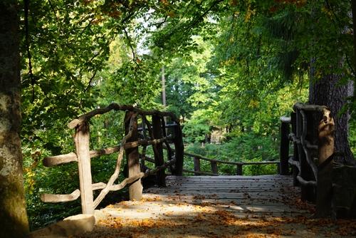 Brücke im Englischen Garten