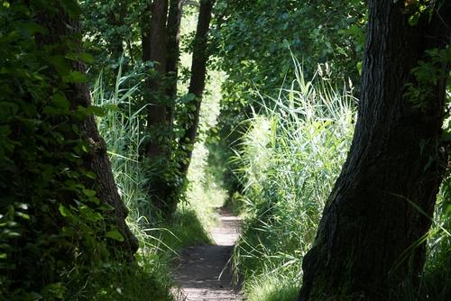 Enger Waldweg