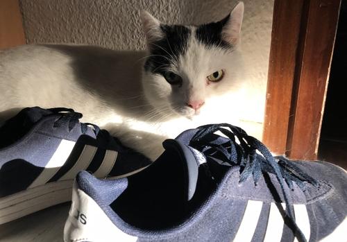 Kater Tami liegt hinter den Sneakers