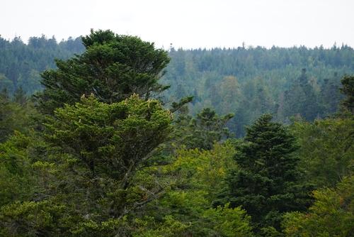Blick auf den Wald vom Baumwipfelpfad