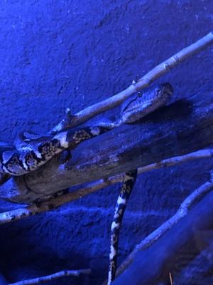 Schlange auf einem Ast im Nachthaus