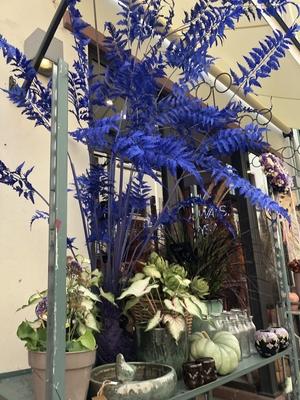 Blaue Pflanzendeko